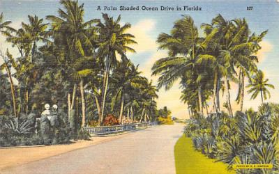 A Palm Shaded Ocean Drive in Flordia, USA Misc, Florida Postcard