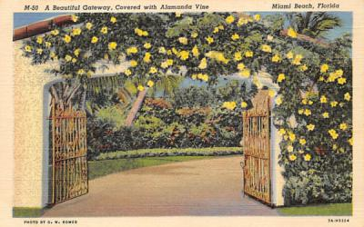 A Beautiful Gateway, Covered with Alamanda Vine Miami Beach, Florida Postcard