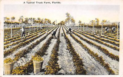 A Typical Truck Farm Misc, Florida Postcard
