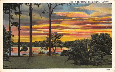 A Beautiful Lake Scene, Florida, USA Postcard