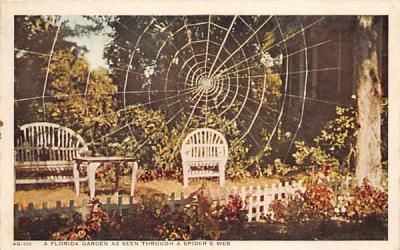 A Florida Garden as Seen Through a Spider's Web Postcard