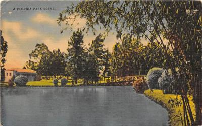 A Florida Park Scene, USA Postcard