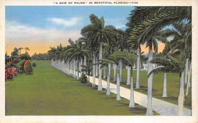 A Row of Palms in Beautiful FL, USA Misc, Florida Postcard