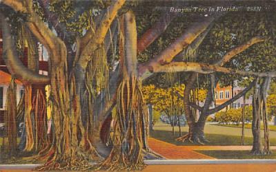 Banyan Tree in FL, USA Misc, Florida Postcard