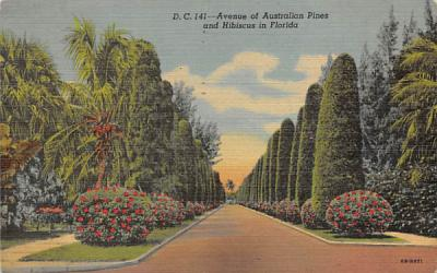 A Avenue of Australian Pines and Hibiscus Misc, Florida Postcard