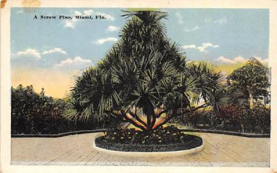 A Screw Pine Miami, Florida Postcard