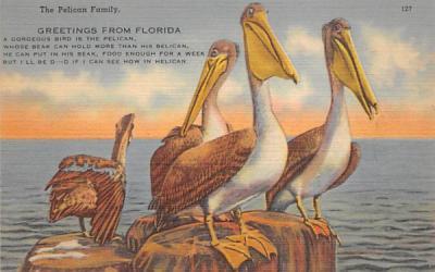 The Pelican Family Misc, Florida Postcard