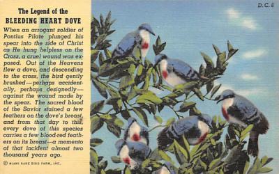 The Legend of the Bleeding Heart Dove Misc, Florida Postcard