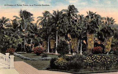 A Cluster of Palm Trees, in a Florida Garden Postcard