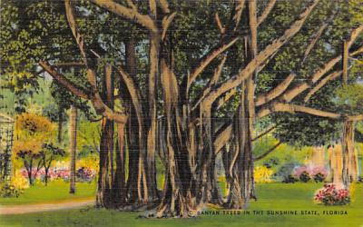 Banyan Trees in the Sunshine State, FL, USA Misc, Florida Postcard