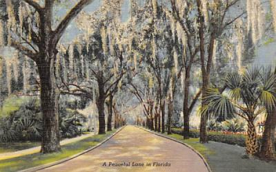 A Peaceful Lane in FL, USA Misc, Florida Postcard