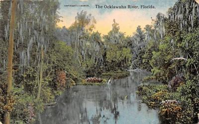 The Ocklawaha River Misc, Florida Postcard