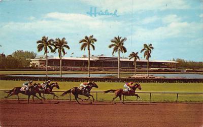 A Thrilling Race at Hialeah Racecourse Miami, Florida Postcard