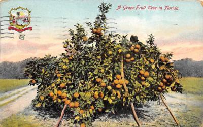 A Grape Fruit Tree in Florida, USA Postcard