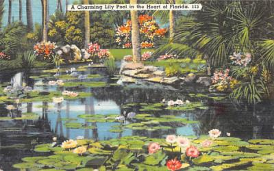 A Charming Lily Pool in the Heart of Florida, USA Postcard