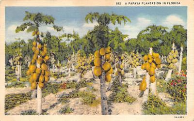 A Papaya Plantation in FL, USA Misc, Florida Postcard