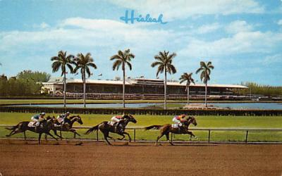 A Thrilling Race at Hialeah Racecourse Miami, Florida Postcard