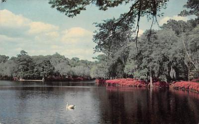 A Southern Beauty Spot Misc, Florida Postcard