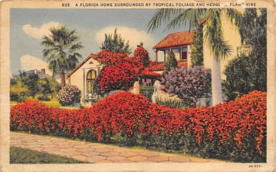 A Florida Home Surrounded by Tropical Foliage  Postcard