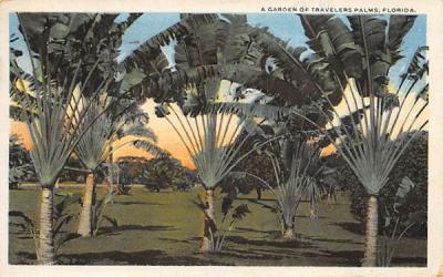 A Garden of Travelers Palms, FL, USA Misc, Florida Postcard