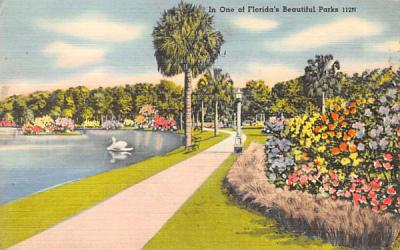 In Once of Florida's Beautiful Parks, USA Postcard