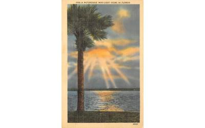A Picturesque Moonlight Scene in FL, USA Misc, Florida Postcard