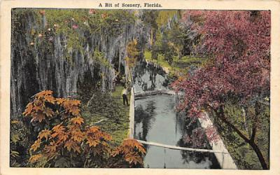 A Bit of Scenery, FL, USA Misc, Florida Postcard