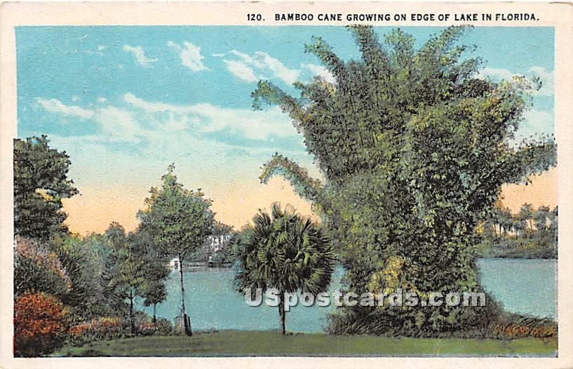 Bamboo Cane - Misc, Florida FL Postcard