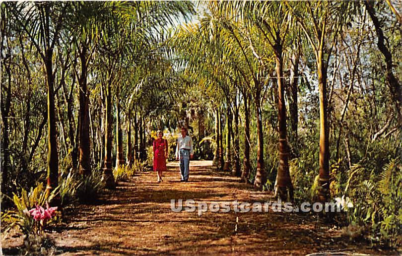 Palm Lined Walk - Naples, Florida FL Postcard