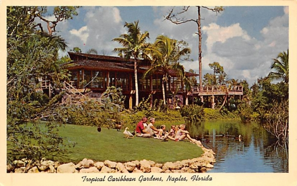 Tropical Caribbean Gardens Naples, Florida Postcard
