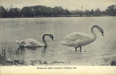 Lake Lucerne - Orlando, Florida FL Postcard