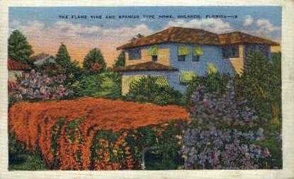 Flame Vine - Orlando, Florida FL Postcard