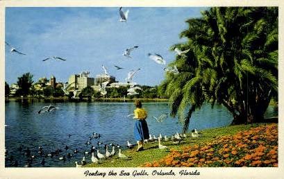 Sea Gulls - Orlando, Florida FL Postcard