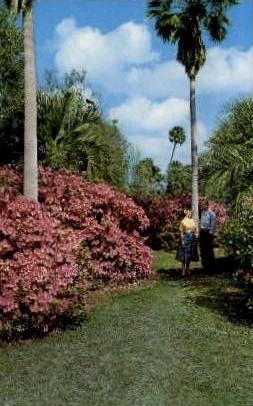Lake Ivanhoe - Orlando, Florida FL Postcard