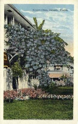 Bougainvillea - Orlando, Florida FL Postcard