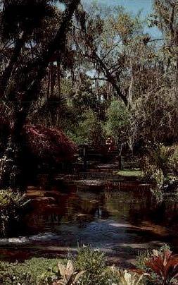 Flaming Azaleas - Orlando, Florida FL Postcard