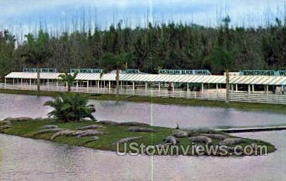 Alligators - Orlando, Florida FL Postcard