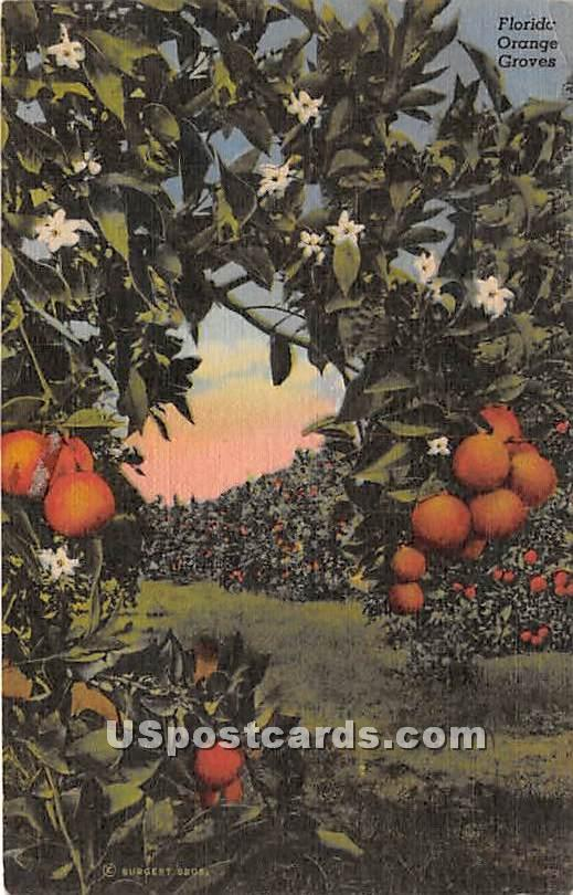 Orange Groves, Florida FL Postcard