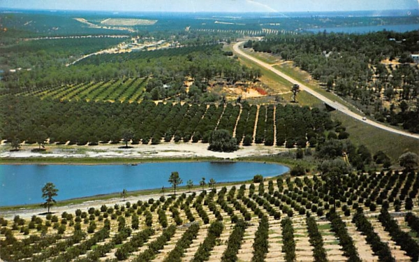 Citrus groves and lakes  Orange Groves, Florida Postcard