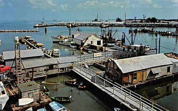 The Turtle Krall and Part of the Shrimp Fleet Old Key West, Florida Postcard