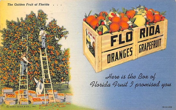 The Golden Fruit of Florida? Postcard