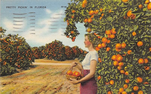 Pretty Pickin's in Florida, USA Postcard