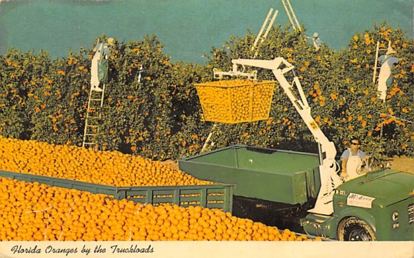 Florida Oranges by the Truckload Postcard