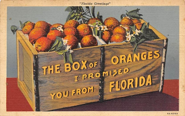 The Box of Oranges I Promised You from Florida, USA Postcard