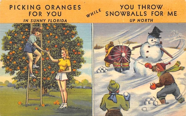 Picking Oranges for you in Sunny Florida, USA Postcard