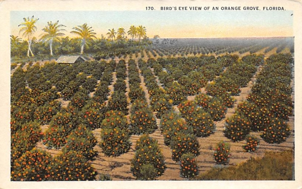 Bird's Eye View of an Orange Grove, FL, USA Orange Groves, Florida Postcard