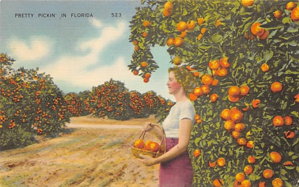 Pretty Pickin in Florida, USA Postcard