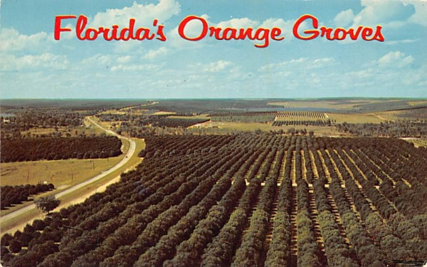 Florida's Orange Groves, USA Postcard