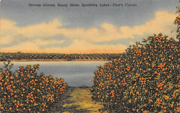 Orange Groves, Sunny Skies, Sparkling Lakes Florida Postcard
