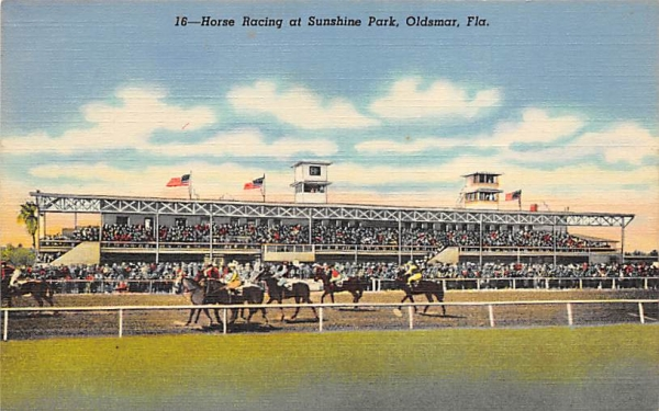 Horse Racing at Sunshine Park Oldsmar, Florida Postcard